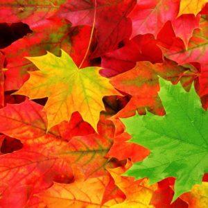 Herbst-Angebote
